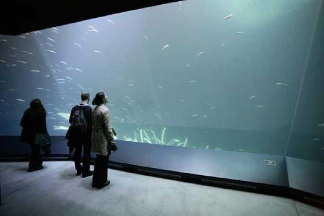 Оцеанеум - Немецкий музей моря. Фото © J-M Schlorcke