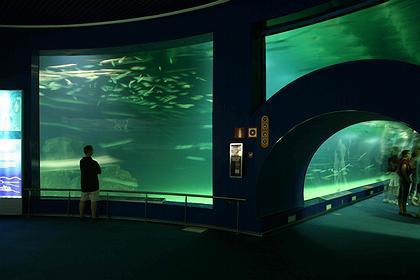 В Океанариуме. Фото: Николай Малинин