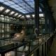 Реновация Большой галереи эволюции Музея естественной истории, Париж