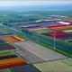 Мармолеум: живые краски Голландии для всего мира